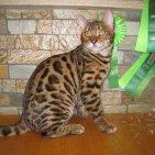 Fantone de Lounycat 6 mois