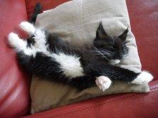pénible la vie de chaton :-)