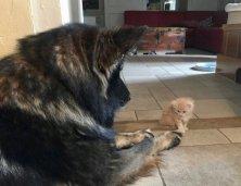 Hélios notre chien monte la garde
