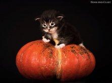 Il vous souhaite un bel automne et n'est pas disponible! Il n'y a plus de chatons actuellement .