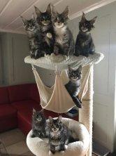 et c'est le départ de mes chatons la maison sera bientôt vide. Je leur souhaite une heureuse et longue vie.
