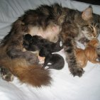 Tyla et ses 1ers chatons