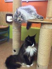 La Cléo et Laïma de Lounycat aussi en vacances et super de voir leur évolution elles sont magnifiques.