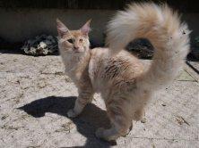 Magnifique Like de Lounycat 5 mois déjà