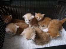 CHATONS DISPONIBLES