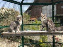 Only you et Ornellaia de Lounycat mes futurs reproducteurs profitent du printemps.