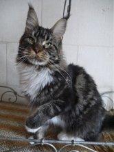 Tobias Emilitacoon 15 mois et fier d'être papa de magnifiques chatons!